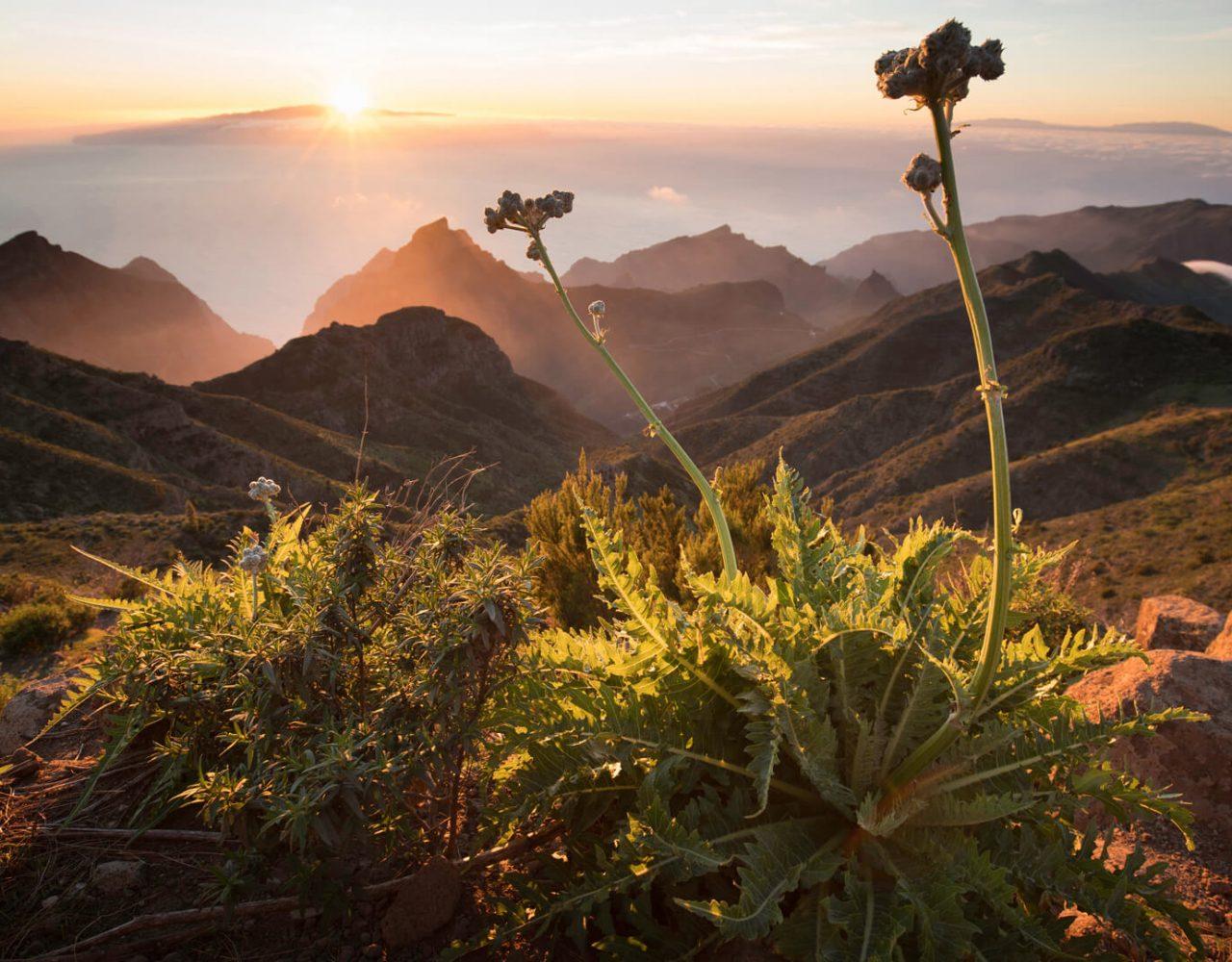 Canary Islands Teneriffa