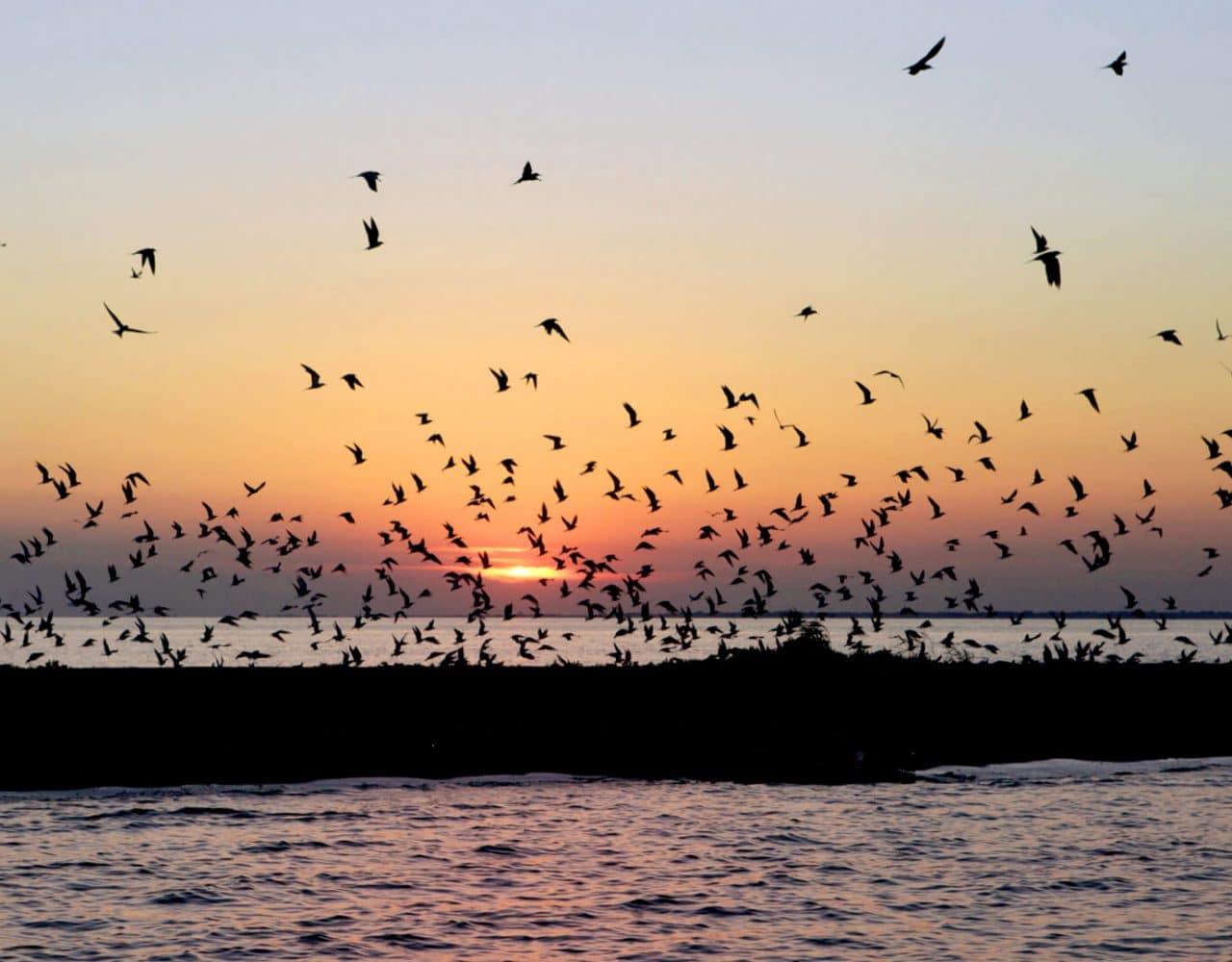 Vogelkolonie Donaudelta